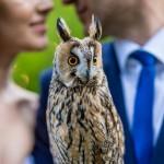 Свадебный фотограф Киев Межигорье идеи для свадьбы свадебная фотосессия позы (54)